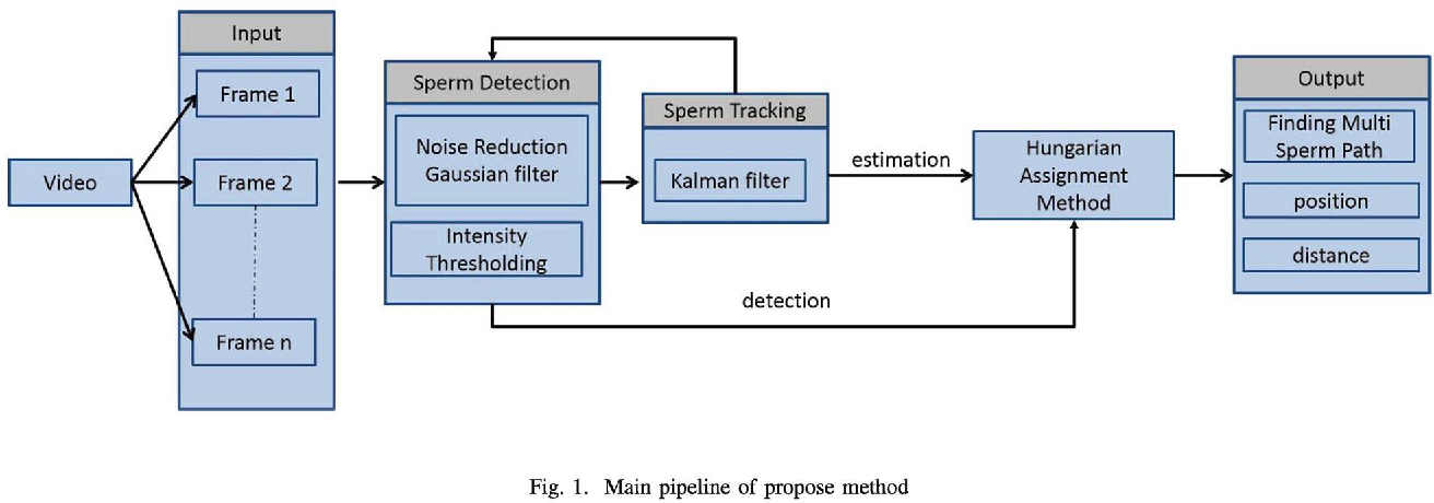 Multi-sperm tracking using Hungarian Kalman Filter on low frame rate ...
