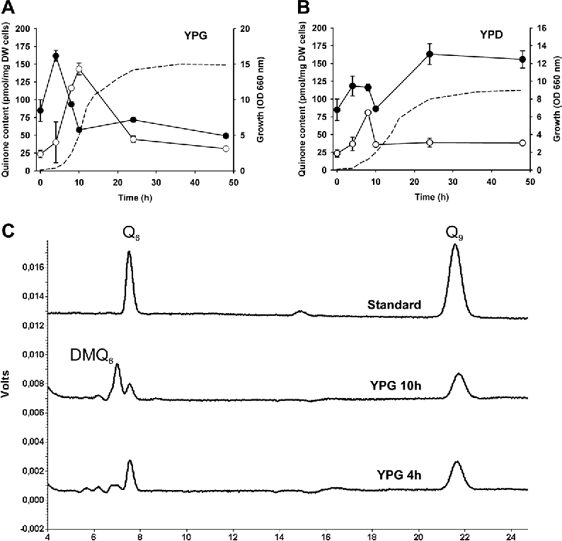 Figure 3. Yeast cell content of Q6 and DMQ6 during growth in YPG and YPD. CEN.PK2–1C cells (0.1 OD660nm/ml) were grown in YPG (A) and YPD (B) media. At the indicated times samples of 1 g wet weight cells were subjected to a lipid extraction and separation by HPLC-ECD to quantify Q6 and DMQ6. Data are expressed as the average of three injections from two samples obtained in the same culture ± SD. Closed and open circles designate Q6 and DMQ6, respectively. Cell growth was inserted as the dashed line. In panel C are shown two chromatograms corresponding to YPG culture at 4 and 10 hours.