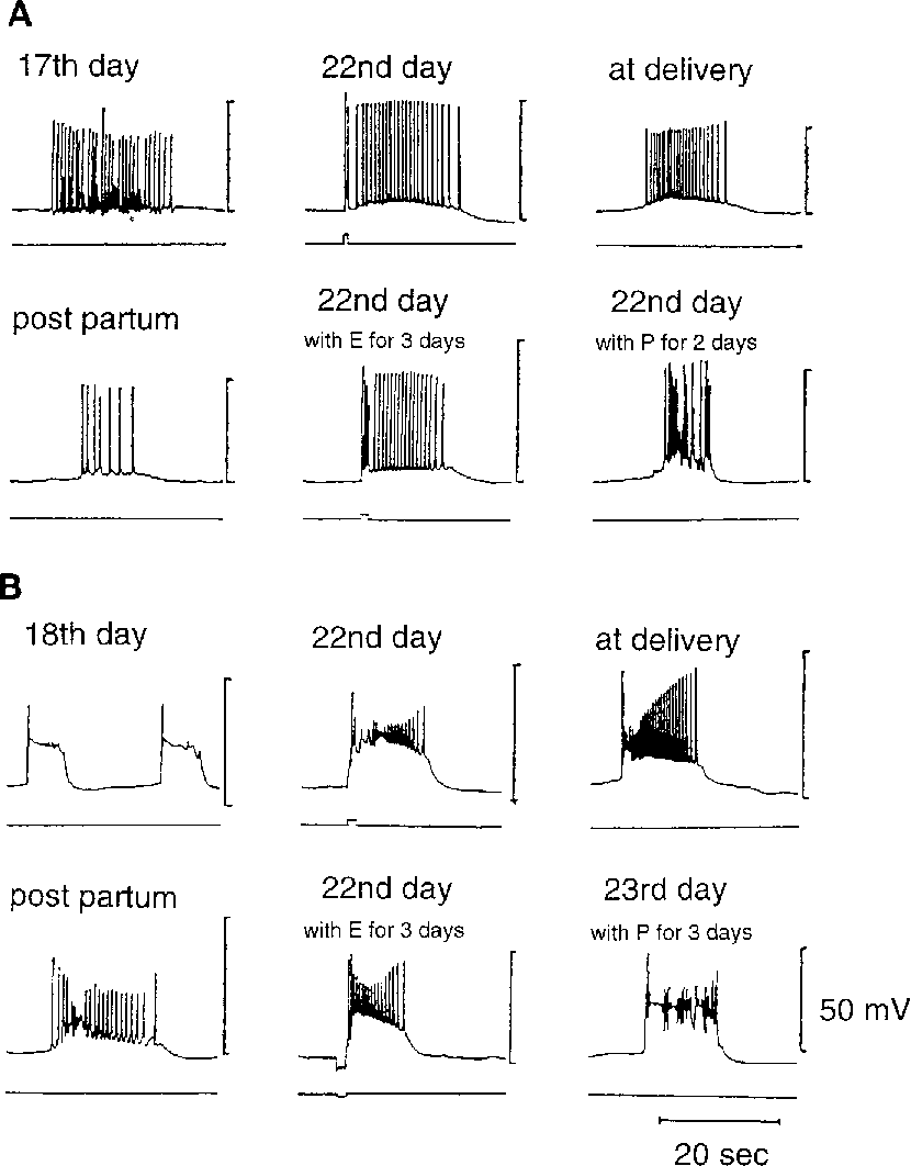 Physiological Features Of Visceral Smooth Muscle Cells With Special