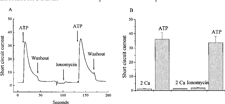 Calcium And Atp Regulation Of Ion Transport In Larval Frog Skin