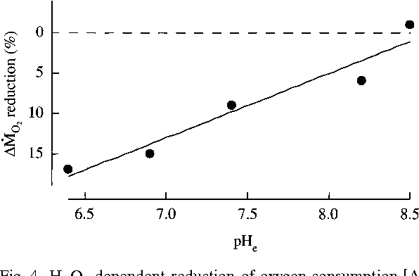 The effect of hydrogen peroxide on isolated body wall of the lugworm
