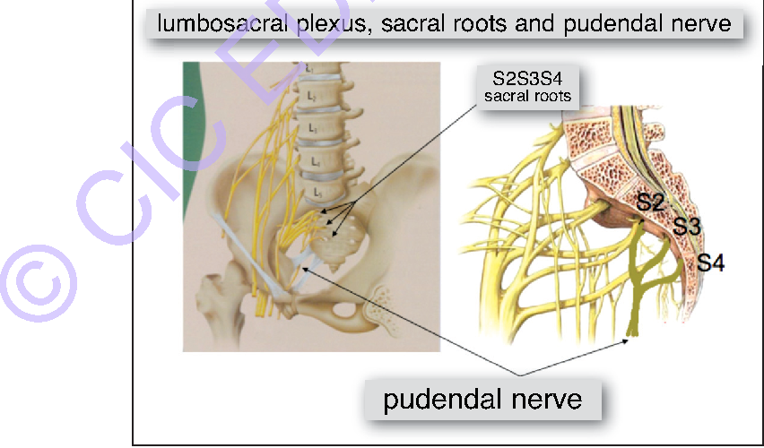 Figure 5 From Interventional Neurophysiology And An Implantable