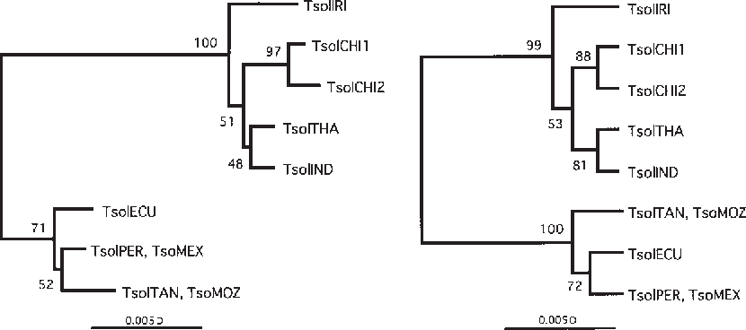 Figure 1 From Molecular Variation Of Taenia Solium In The World