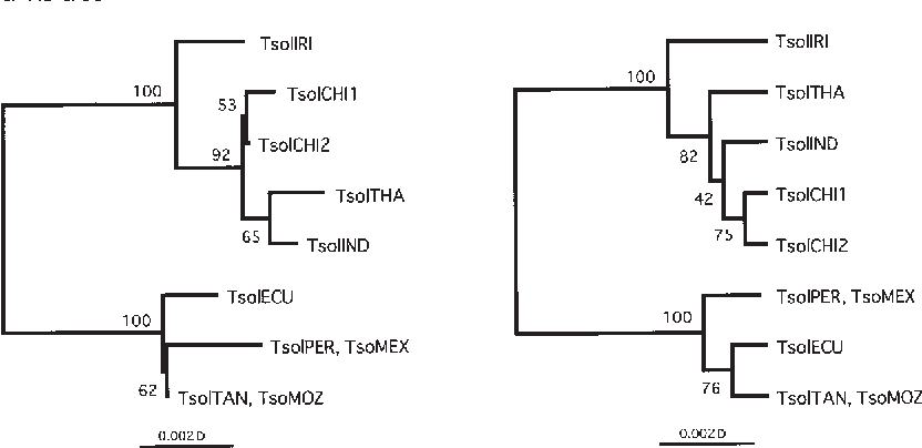 Figure 2 From Molecular Variation Of Taenia Solium In The World