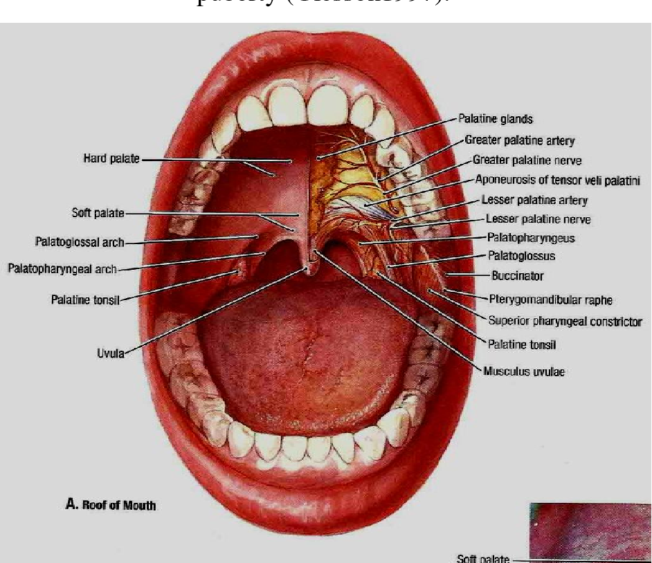 Evaluation Of Normative Tonsils Size In Sudanese Children By Using