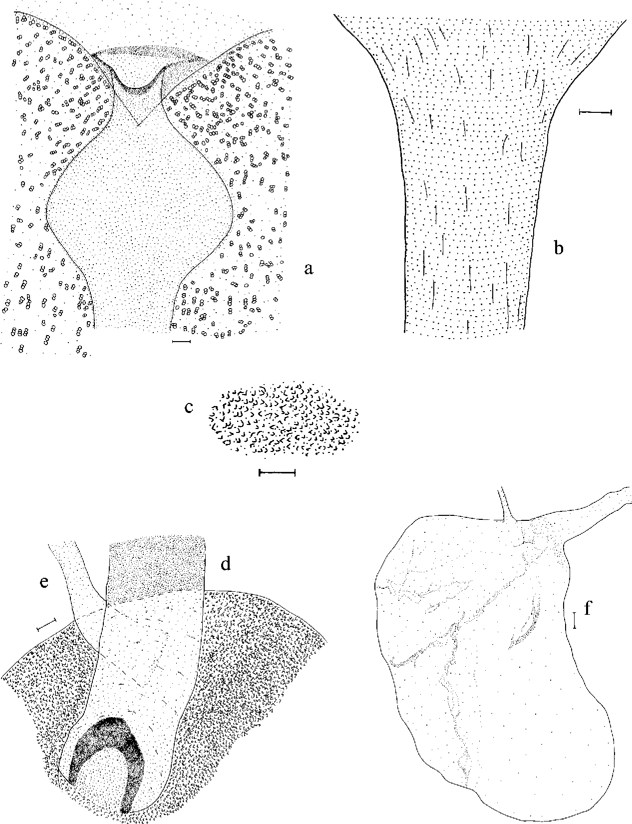 Figure 8 from A new species of Rhigognostis (Lepidoptera ...