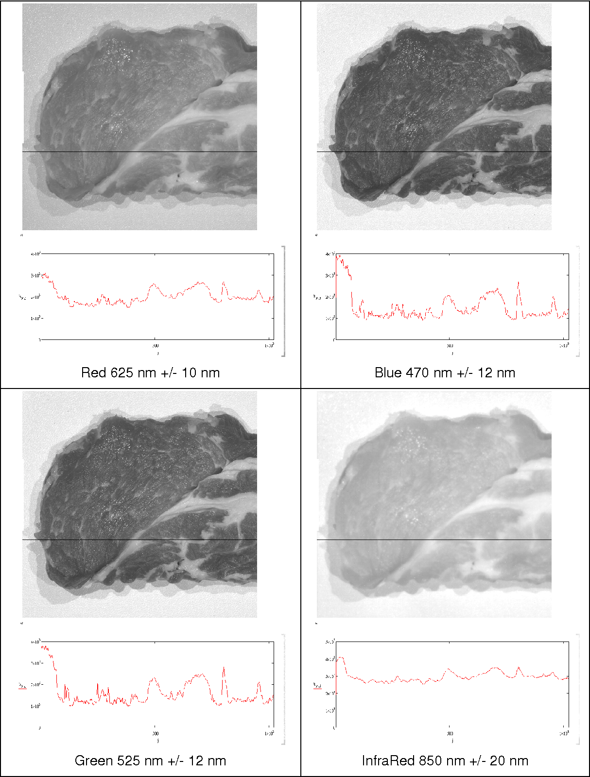 FIGURE 1: High resolution image of a rib sample recorded applying quasi-monochromatic illumination alternatives (LED modules) with the corresponding intensity diagrams of the multispectral rib images at the marked image-row