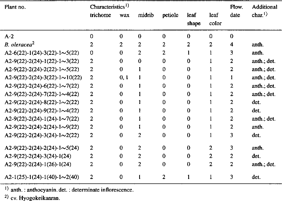 Table 3 . Morphological characteristics and flowering date of 2n = 22, 24 and 40 plants derived from four consecutive selfing of aneuploids
