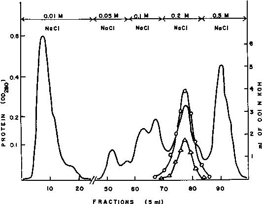 Figure 2 From Somkuti Babel And Somkuti