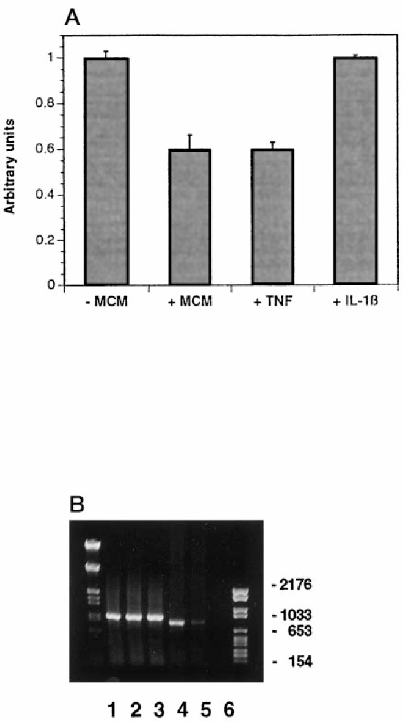 Figure 7. Activated microglia downregulate TN-R expression by cultured OLs. A, Effect of MCM and cytokines on TN-R protein expression. Media conditioned by OLs maintained for 2 d in MCM, TNF-a (1TNF ), or IL-1b (1IL-1b) were analyzed by sandwich ELISA using monoclonal Ab tn-R1 as a linker. Values for the TN-R content represent mean 6 SD of triplicate measurements of OL-conditioned media obtained from three (for MCM and TNF-a) and two (for IL-1b) independent experiments. In each experimental set, values for TN-R from OLs maintained in culture medium only (-MCM ) were set as 1.0. B, Effect of MCM and TNF-a on TN-R mRNA expression by cultured OLs. Total RNA isolated from OLs maintained for 2 d in culture medium (lanes 1 and 4 ), MCM (lanes 2 and 5), or in culture medium containing TNF-a (lanes 3 and 6 ) was analyzed by RT-PCR using GAPDH-specific (lanes 1–3) and TN-R-specific primers (lanes 4–6 ). The apparent molecular weights of the DNA marker (in base pairs) are shown at the right.