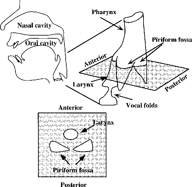 Figure 2 From Acoustic Characteristics Of The Piriform Fossa In