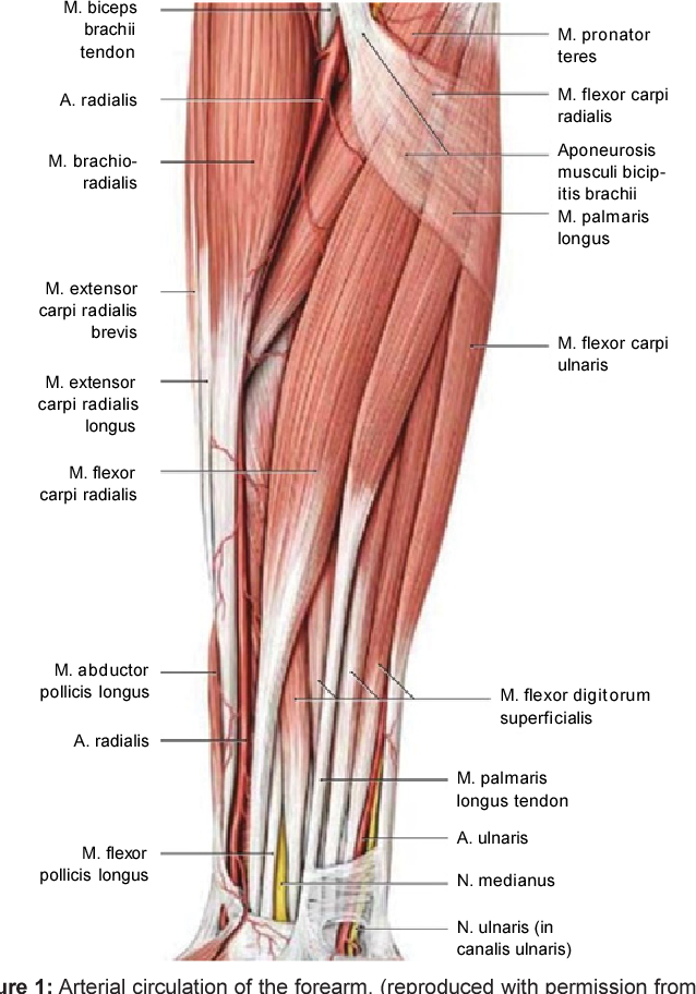 Radial Artery Cannulation : A Review Article - Semantic Scholar