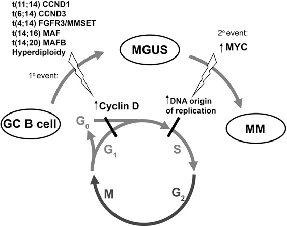Figure 7. Stepwise Dysregulation of Early Cell Cycle Checkpoints during MGUS and MM Evolution