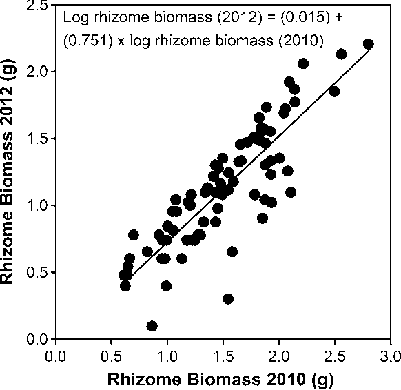 Fig. 1 Linear regression of 2012 black cohosh fresh-weight rhizome biomass to 2012 rhizome biomass for transplanted black cohosh rhizomes. Data log transformed ?1 for normality and homogeneity of variance