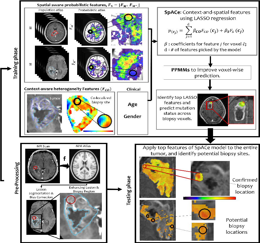 "Figure 1 for Spatial-And-Context aware (SpACe) ""virtual biopsy"" radiogenomic maps to target tumor mutational status on structural MRI"