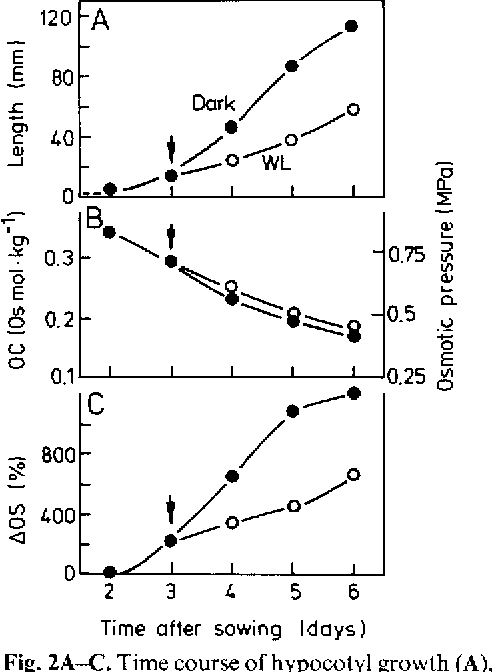 Figure 2 From Osmotic Relations During Elongation Growth In