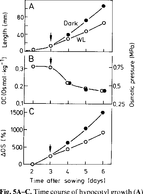 Figure 5 From Osmotic Relations During Elongation Growth In