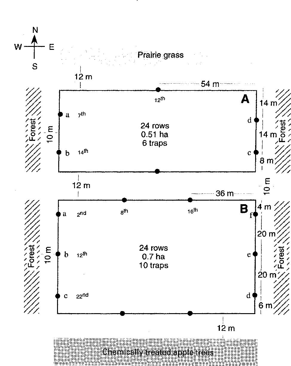 Managing apple maggot, Rhagoletis pomonella [Diptera