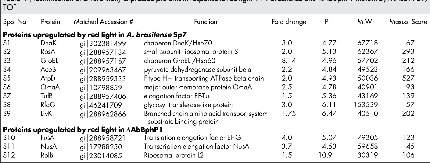 Table 1 | Identification of differentially expressed proteins in response to red light in A. brasilense and DAbBphP1 mutant by MALDI-TOF/ TOF