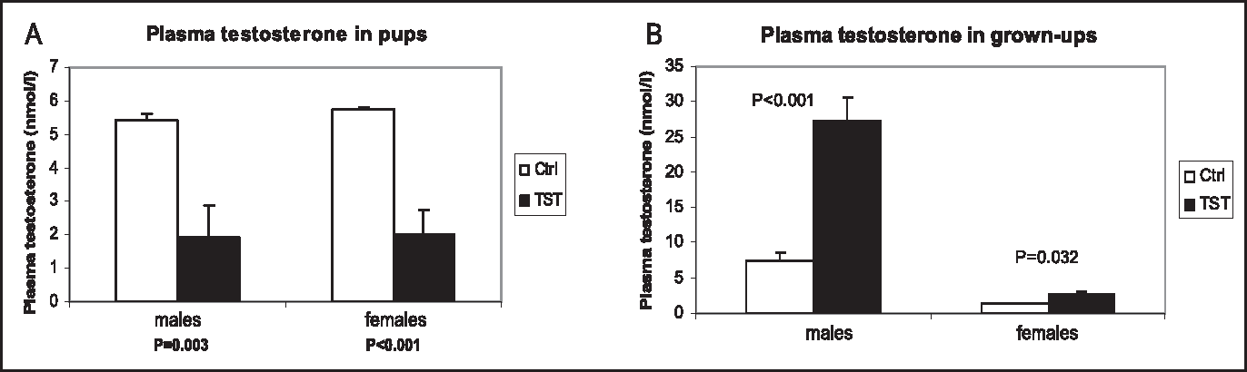 Prenatal Influences In Autism >> Figure 1 From Prenatal Testosterone Influence On Reelin Expression