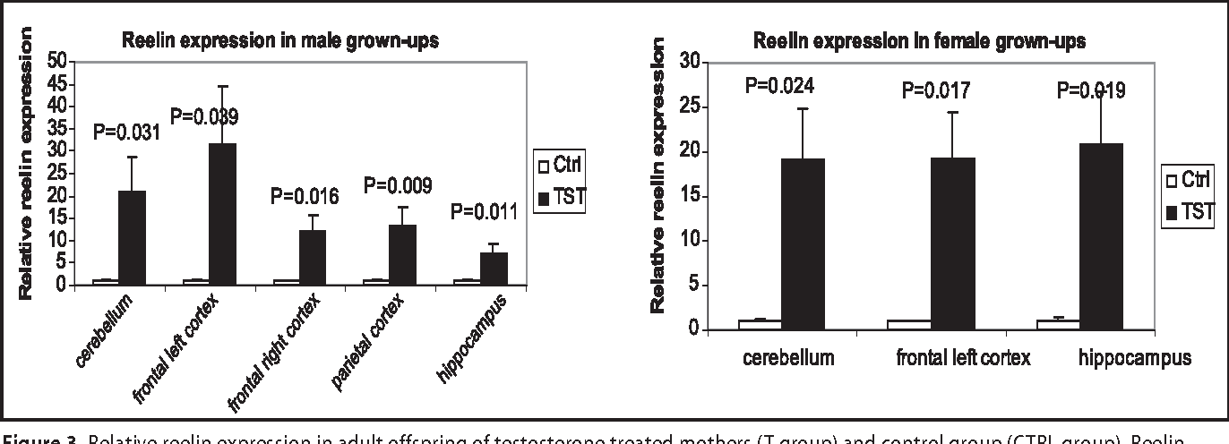 Prenatal Influences In Autism >> Figure 3 From Prenatal Testosterone Influence On Reelin Expression
