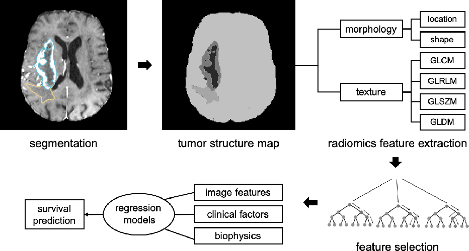 Figure 4 for Automatic Brain Tumour Segmentation and Biophysics-Guided Survival Prediction