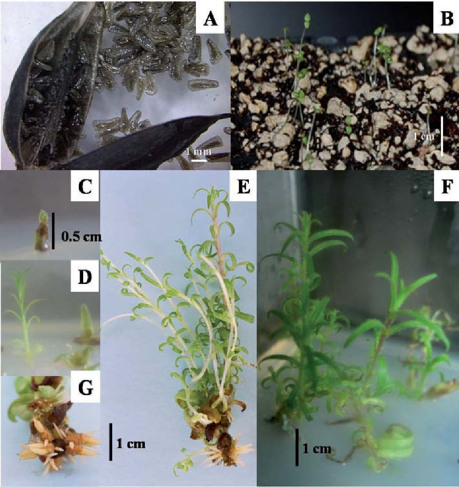 Figure 1 from Propagation and conservation of Castilleja