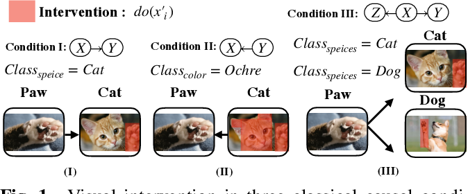 Figure 1 for When Causal Intervention Meets Image Masking and Adversarial Perturbation for Deep Neural Networks