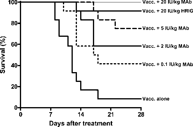Figure 3. Kaplan-Meier survival curves for Syrian hamsters after rabies virus (RV) challenge. Hamsters ( per group) were challenged withn p 12 coyote street RV on day 1. One day after challenge (day 0), the hamsters in the treatment groups were vaccinated with rabies vaccine (vacc.) and treated with 20, 5, 2, or 0.1 IU/kg monoclonal antibody (MAb) cocktail, and the hamsters in the control groups received either vaccine alone or vaccine with 20 IU/kg human rabies immune globulin (HRIG). The hamsters were monitored twice daily and were killed when clinical signs of rabies appeared. Kaplan-Meier survival curves are shown for days 0–28. The hamsters were monitored until day 42 after treatment (no additional deaths occurred between days 28 and 42). Nontreated hamsters (n p ) died within 18 days (data not shown).9