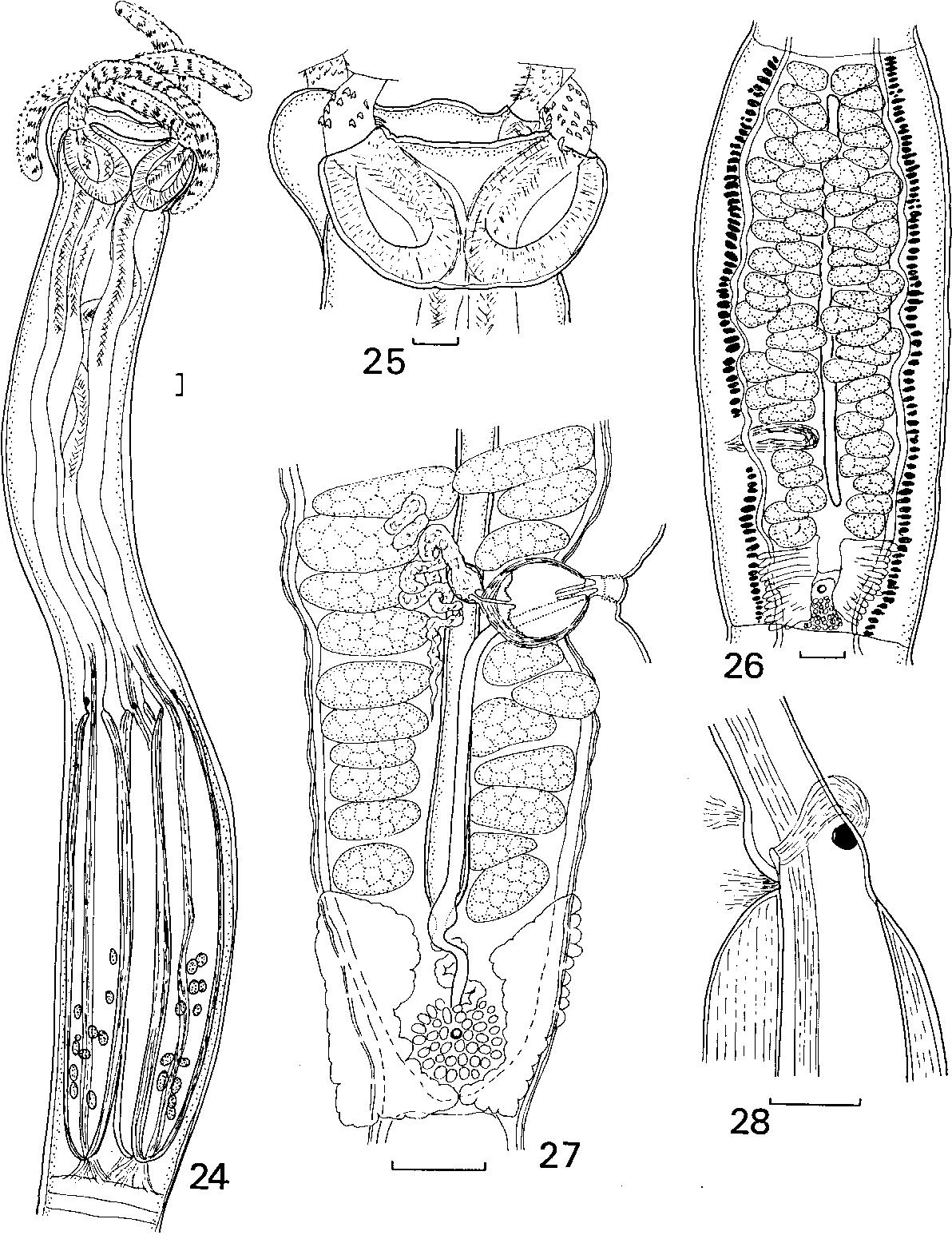 figure 24–28