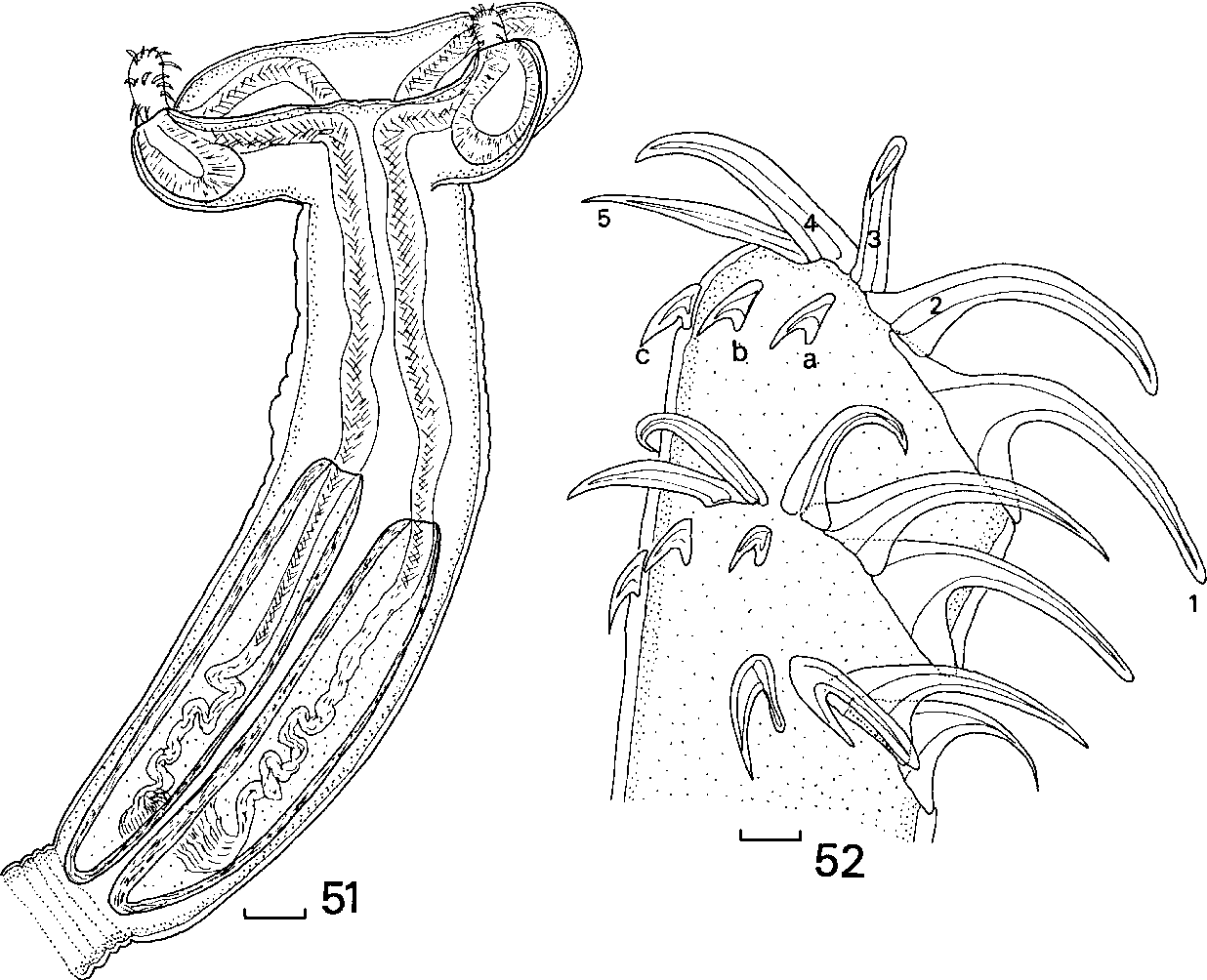 figure 51–52
