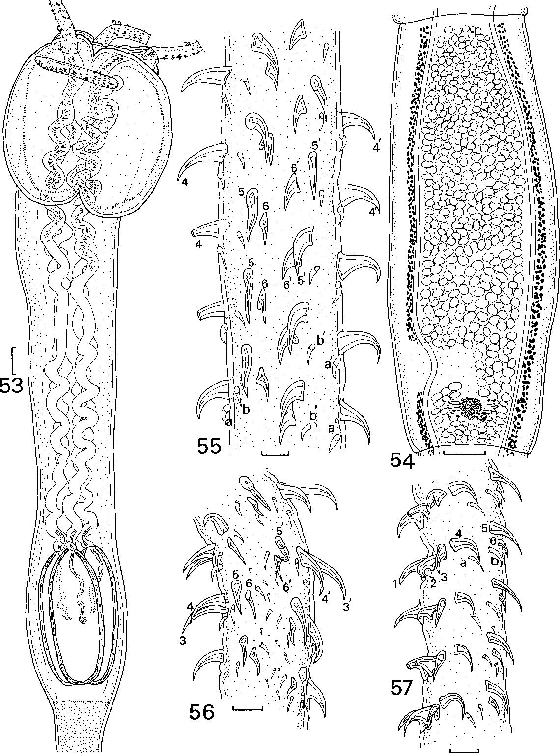 figure 53-57
