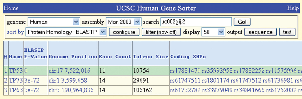 Figure 3. Gene Sorter output showing new columns for the TP53 gene (top row) and all genes meeting the criterion, Protein Homology–BLASTP. Columns shown, left to right: BLASTP E-value, Genome Position, Exon Count, Intron Size (set to maximum size) and Coding SNPs (truncated).