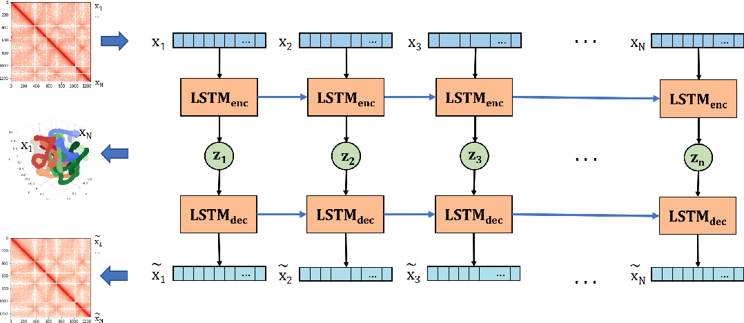 Figure 1 for Inference of the three-dimensional chromatin structure and its temporal behavior