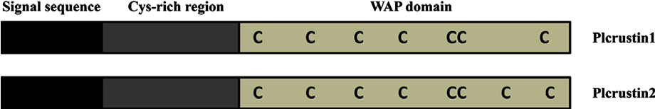 Fig. 1. Schematic representation (not to scale) of the domain structures of two crustins from crayfish Pacifastacus leniusculus.