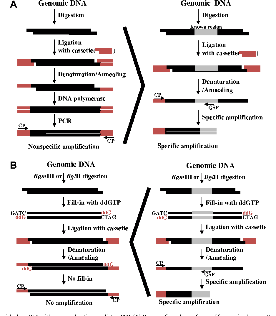 Template-blocking PCR: an advanced PCR technique for genome walking ...