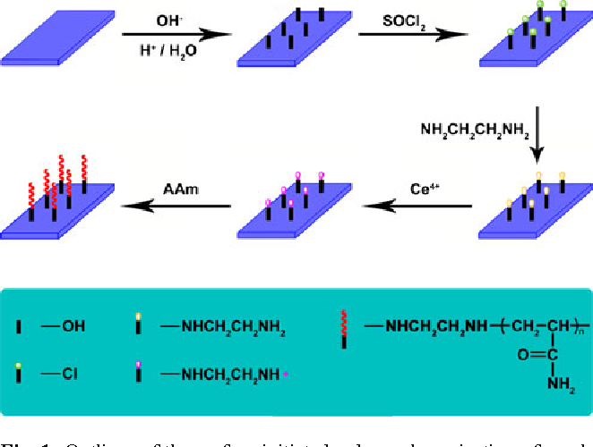 Fig. 1 Outlines of the surface initiated redox polymerization of acrylamide on glass slide