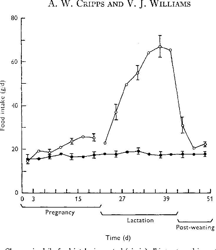 The Effect Of Pregnancy And Lactation On Food Intake