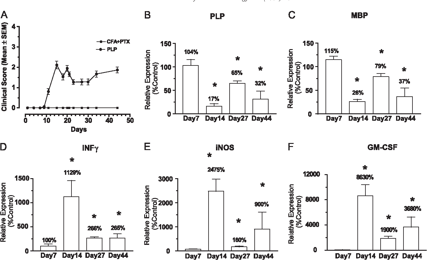 Fig. 2. Gene expression changes during development of EAE. (A) Time course of EAE experiment yielding samples for gene expression studies. (B–F) TaqMan quantitation of changes in spinal expression of the myelin-related genes for proteolipid protein (PLP; B), myelin basic protein (MBP; C), and for the inflammatory mediators interferon gamma (D), iNOS (E), and GM-CSF (F). Individual samples were initially expressed as a percentage of h actin expression determined in the same Taq-Man reaction and then finally expressed as percentages of the values for the same genes obtained from CFA and PTX treated nonEAE control samples at the same time point. Values are meansF S.E.M., n= 4. Statistical significance is calculated by reference to the day 7 time point in each data set.
