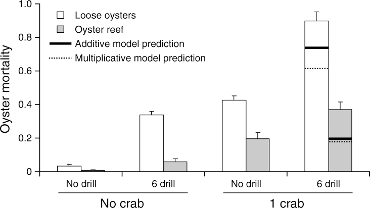 FIG. 1. Oyster mortality (fractional rates) inside field cages (1 m2) in a 2 3 2 orthogonal experiment with southern oyster drills (n ¼ 0 or 6 drills per cage) and stone crabs (n ¼ 0 or 1 crab per cage) as predators. The experiments were conducted using two prey presentations: single, loose oysters in July (white bars) and oyster reef clumps in November (gray bars). Data were recorded following a foraging interval of 96 hours, and all bars represent the mean of six replicates (þSE). Expected mortality rates of oysters when both predators were present are provided for additive (solid line) and multiplicative (dotted line) risk models.