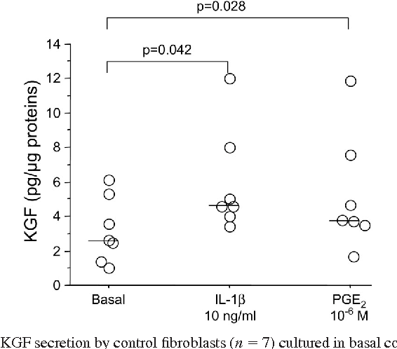 Fig. 5. KGF secretion by control fibroblasts (n 7) cultured in basal condition or exposed to 10 ng/ml IL-1 or 10 6 M PGE2. Individual values and median (bar) are given.