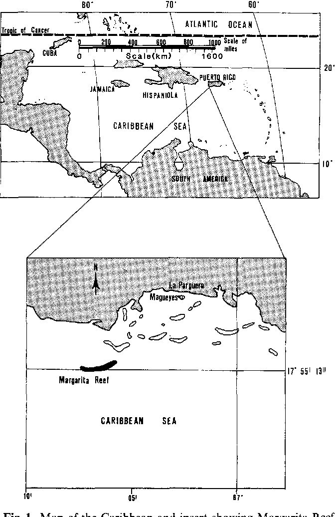 Fig. 1. Map of the Caribbean and insert showing Margarita Reef, the study site