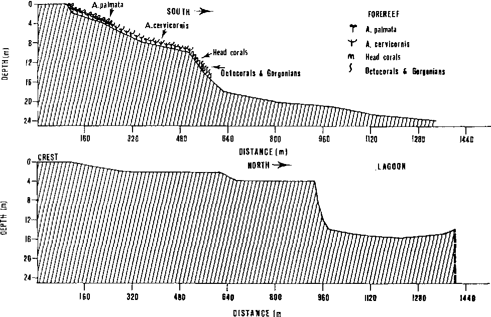 Fig. 3. Typical forereef (top) and backreef (bottom) area profiles with coral zonation according to Aponte (1977)