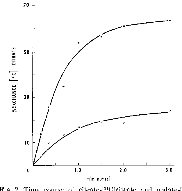 FIG. 2. Time course of citrate-[14C]citrate and malate-[r4C]citrate exchanges as measured by inhibitor stop technique. See text for description of experiment. O-O, 1 mM citrate; O-0, 1 mivr L-malate.