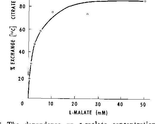 FIG. 6. The dependence on L-malate concentration of the equilibrium position of malate-[%]citrate exchange. The experiment was carried out as described in Table I.