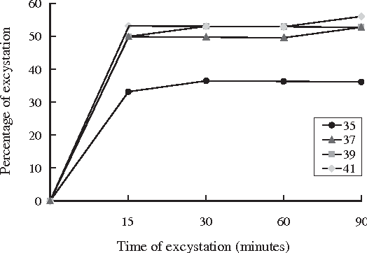 Fig 3- Excystation of Haplorchis taichui metacercariae in varying temperatures (35˚, 37˚, 39˚ and 41˚C) with the presence of 1% trypsin solution.