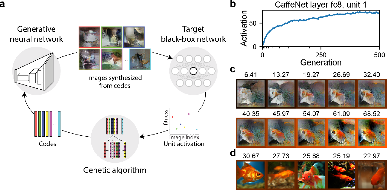 Figure 1 for Gradient-free activation maximization for identifying effective stimuli
