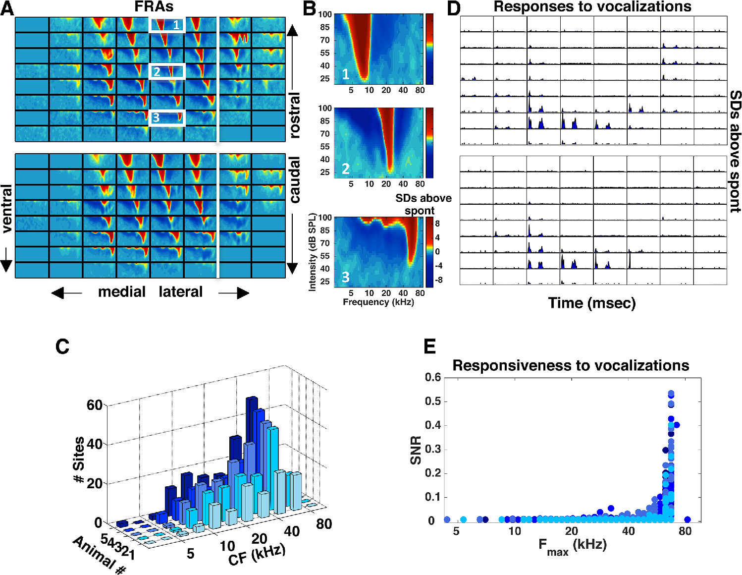 An Overrepresentation of High Frequencies in the Mouse Inferior ...
