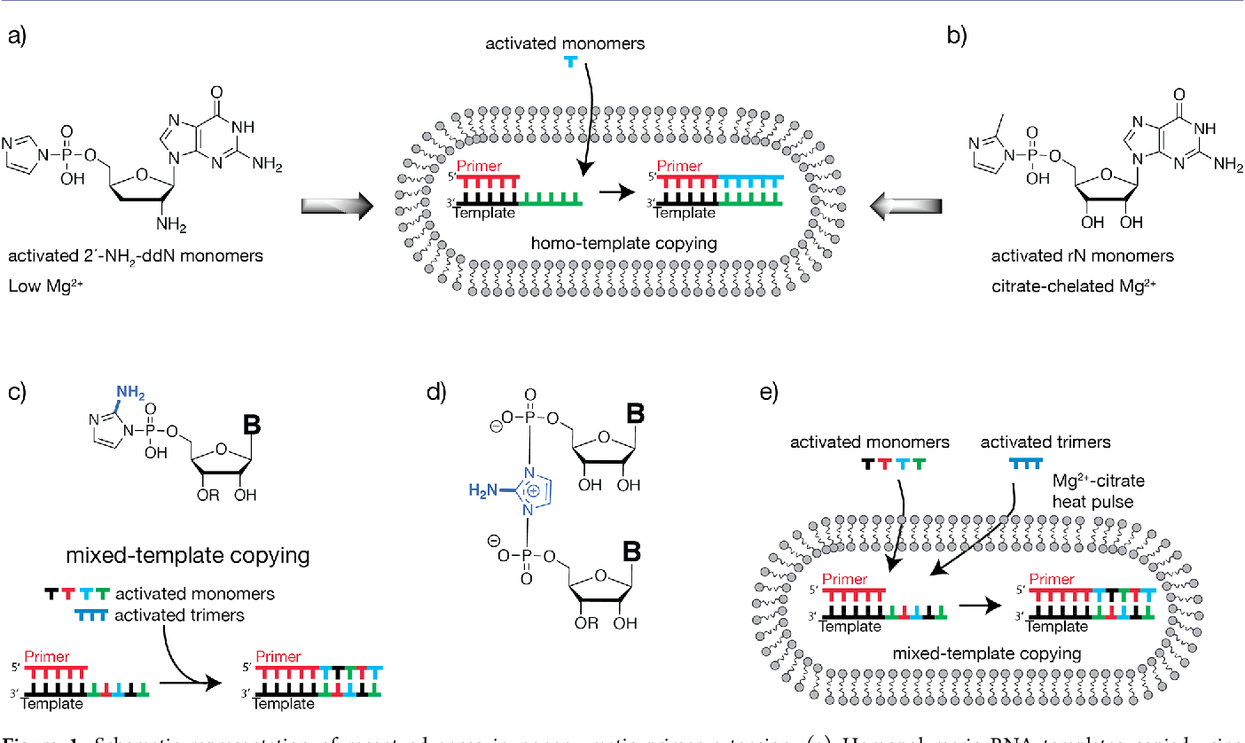 Figure 5 from copying of mixed-sequence rna templates inside model.