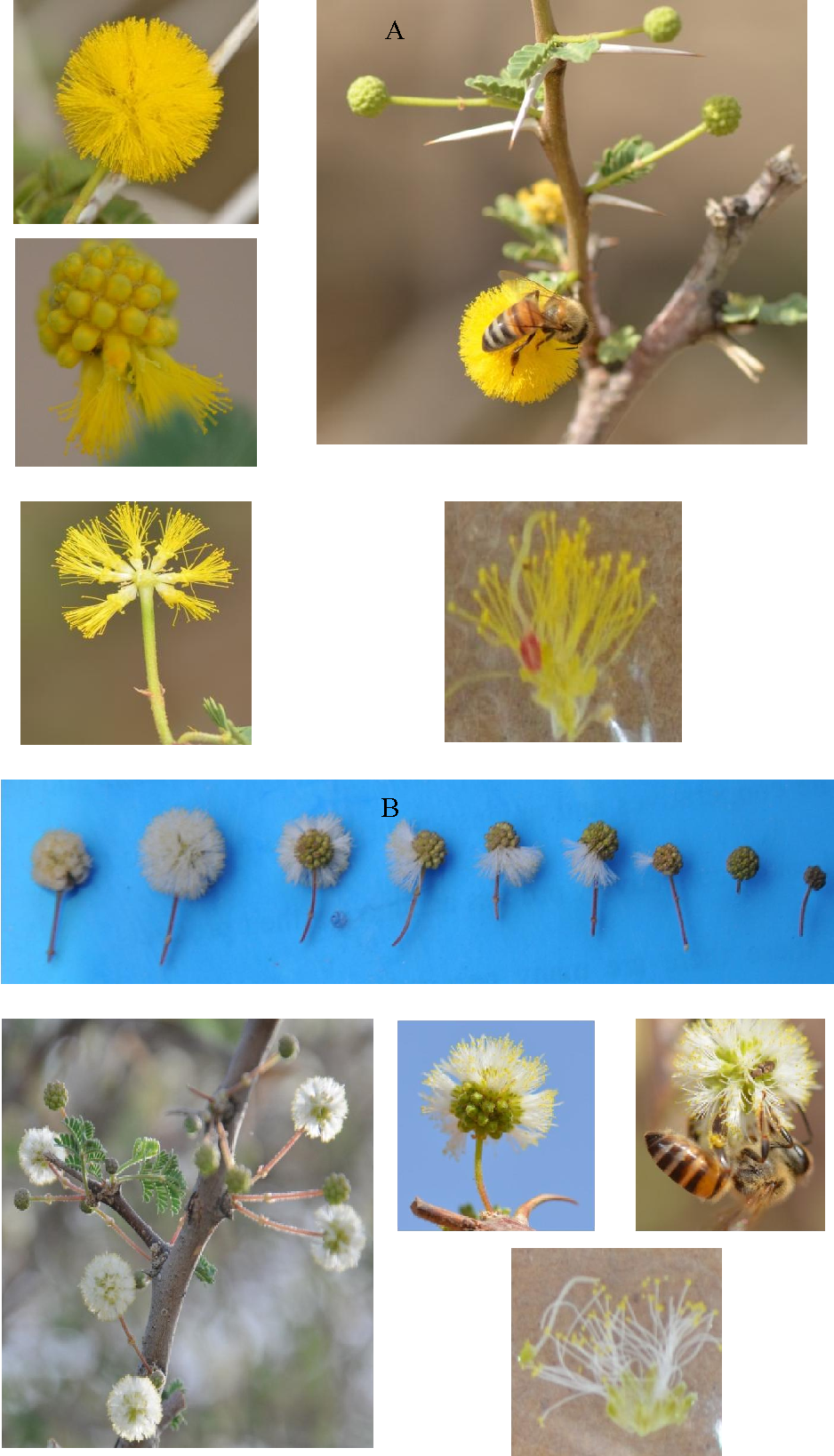 Figure 3 from Pollination ecology , nectar secretion dynamics , and